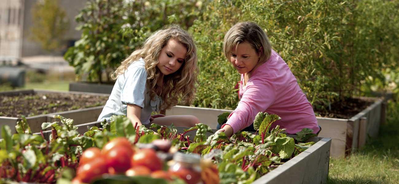 Potager ooreka for Jardin et jardinage